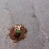 2. flower pot 23
