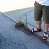 5. flower pot 4