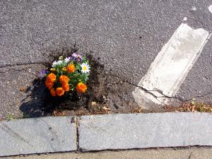 9.5 flower pot 10